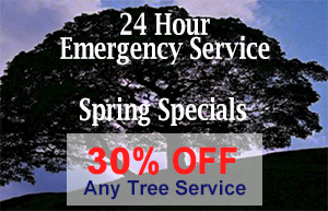 Tree Service Coupon